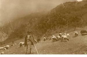 cioban din Deleni
